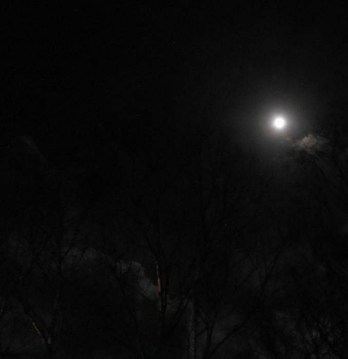 Moon on 1st January, not quite a super moon but still brilliant through the silver birch.
